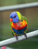 Inquisative Bird