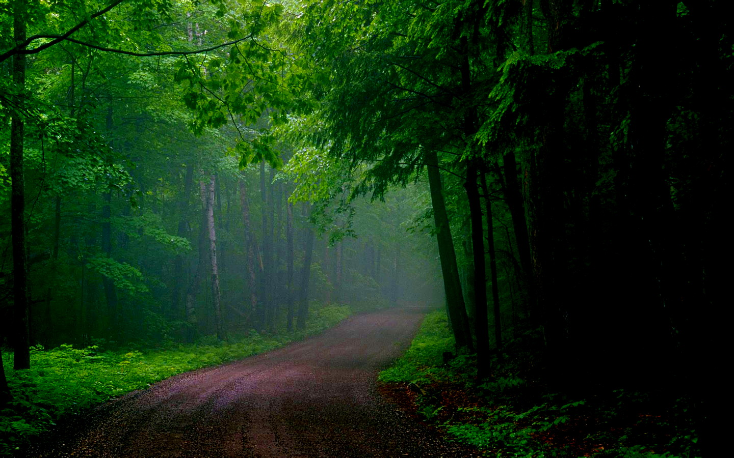 Pin Pin-green-forest-landscape-wallpaper-nature-wallpapers ...