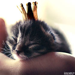 little princess by sadsolitude