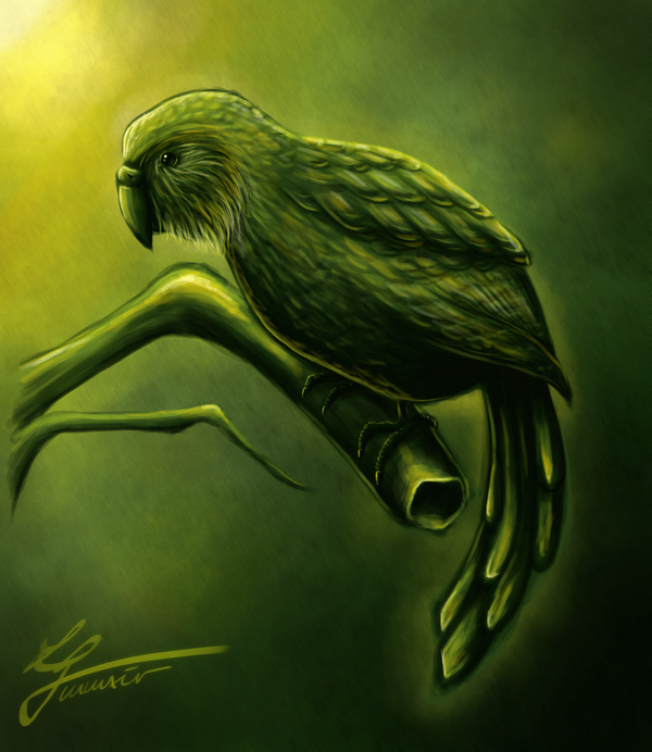 Speedpaint: Kakapo by hello-ground on DeviantArt