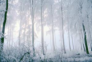 magic forest by bacchuspirit