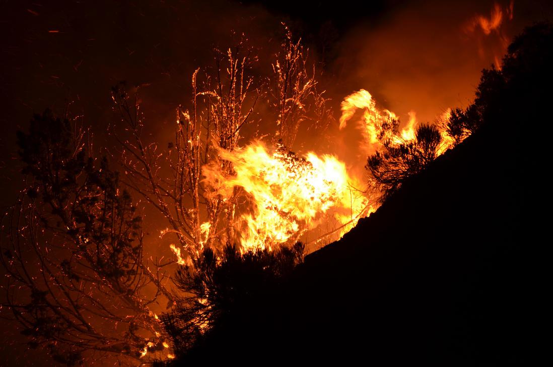 The Burning Bush by ChickensAndDucks