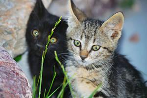Kittens by ChickensAndDucks