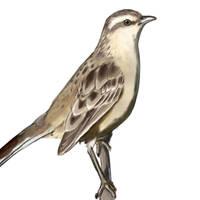 Mocking bird by Skulleton