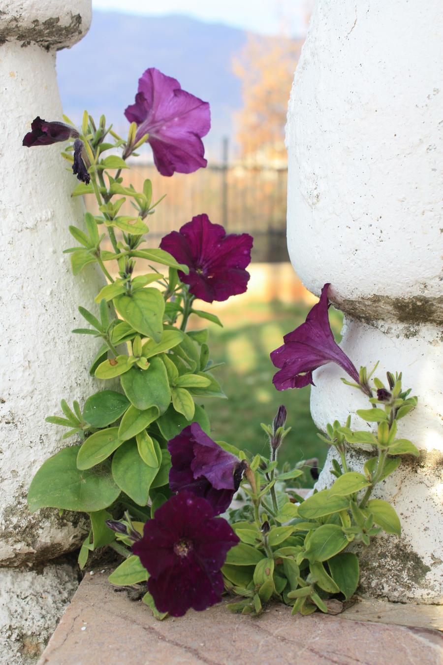lule ne Diber by ReBurton