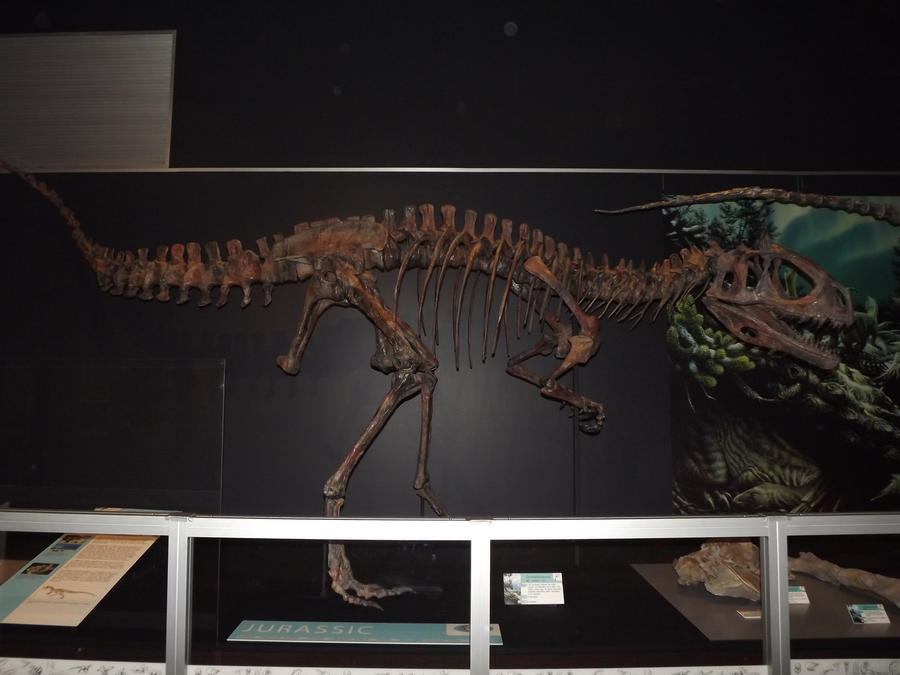 cryolophosaurus skeleton by seraphiimastables on deviantart