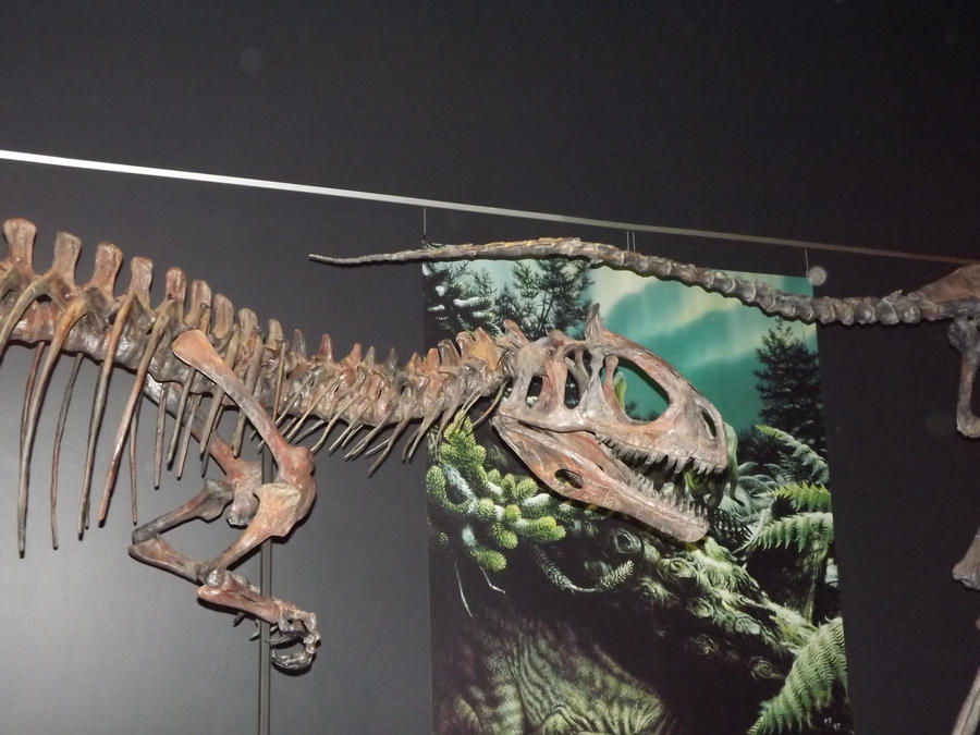 cryolophosaurus skeleton 2 by seraphiimastables on