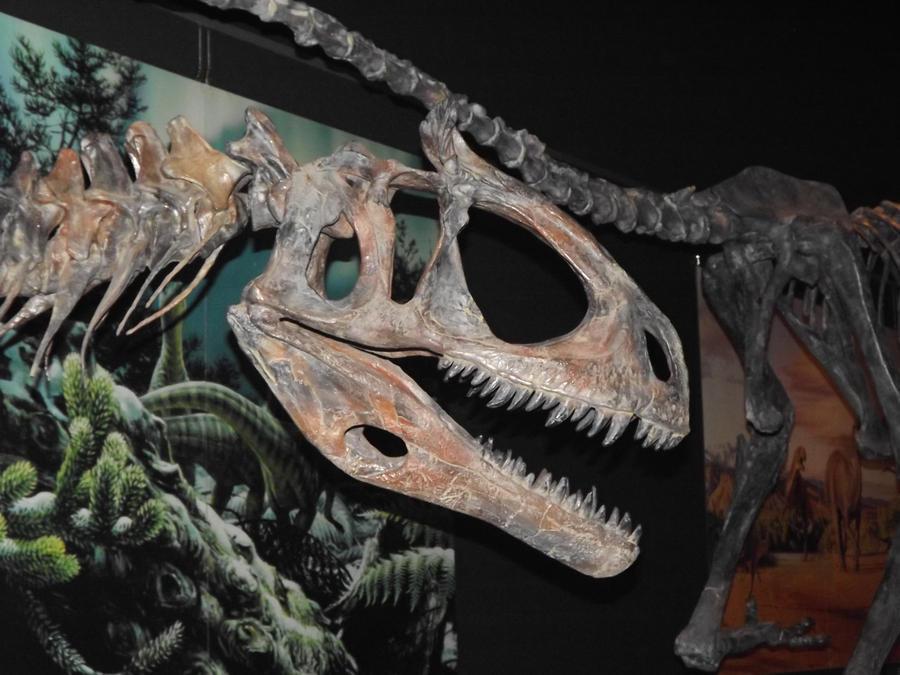 cryolophosaurus skeleton 3 by seraphiimastables on