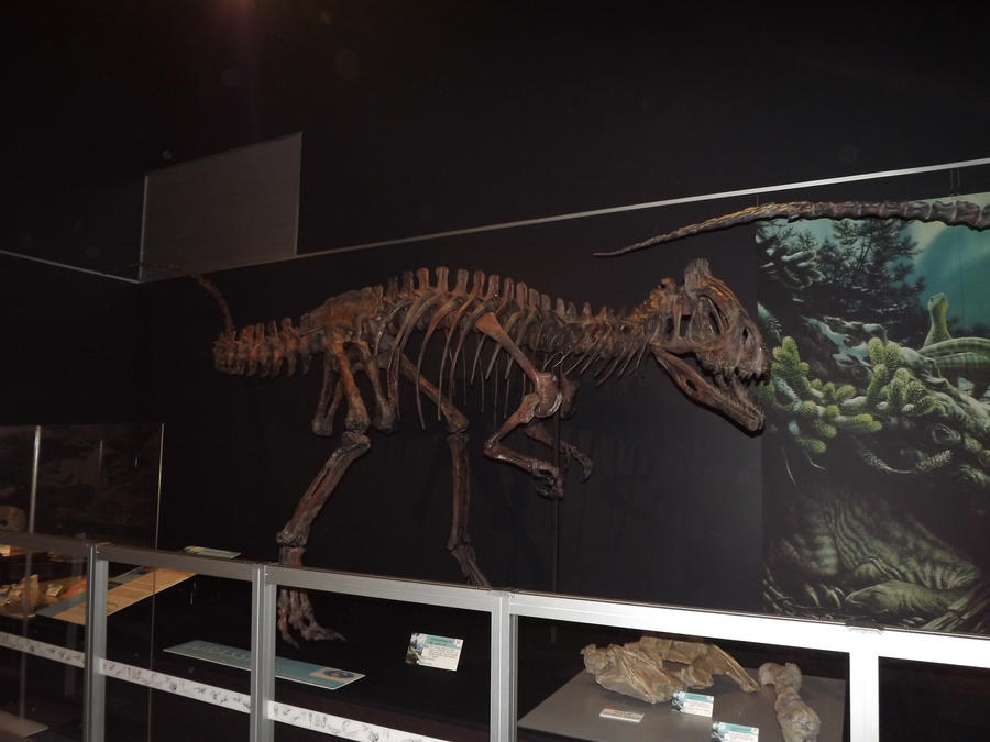 cryolophosaurus skeleton 4 by seraphiimastables on