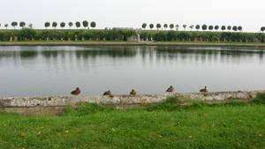 Ducks in a Row by A3ulez
