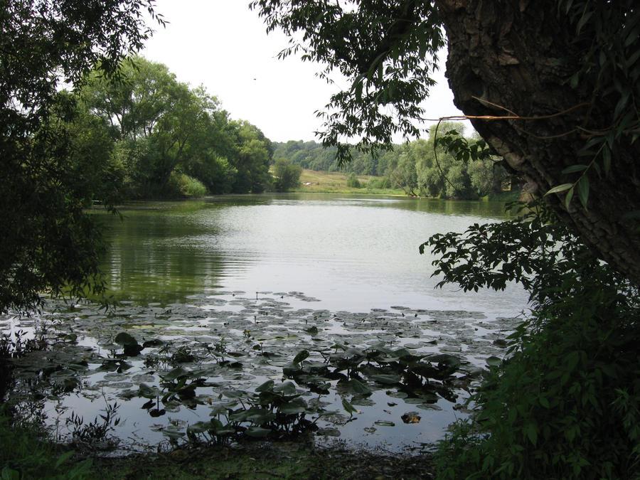 Tolstoy's Big Pond by A3ulez