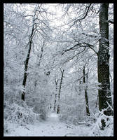 Snow in the wood by philcopain