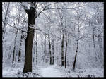 Snow in the wood 2