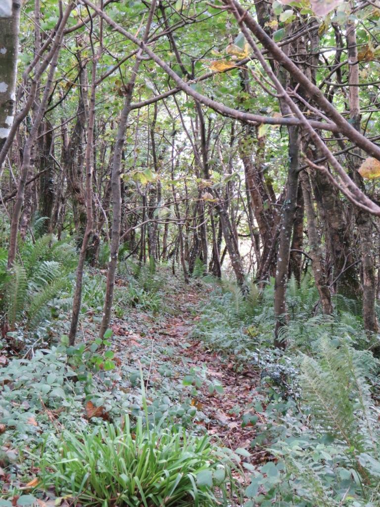 Woodland footpath by Tish-Underwood