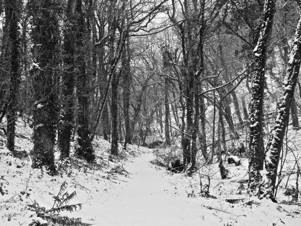Snow woodland footpath by Tish-Underwood
