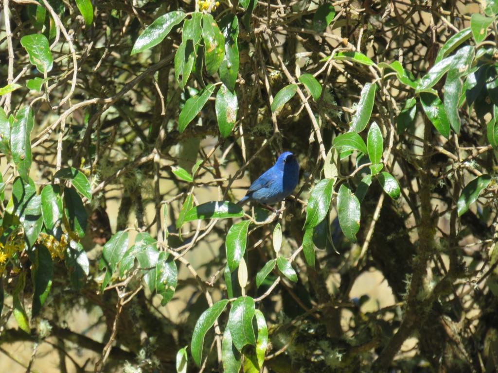 Blue bird by Tish-Underwood