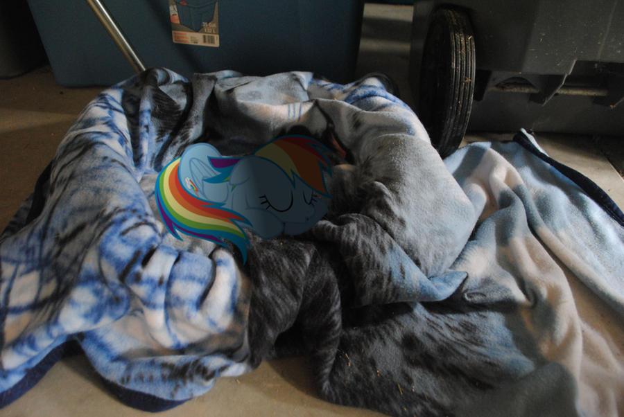 Pet Rainbow Dash is Sleepy by UtterlyLudicrous