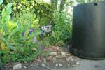 Backyard Camouflage, v2