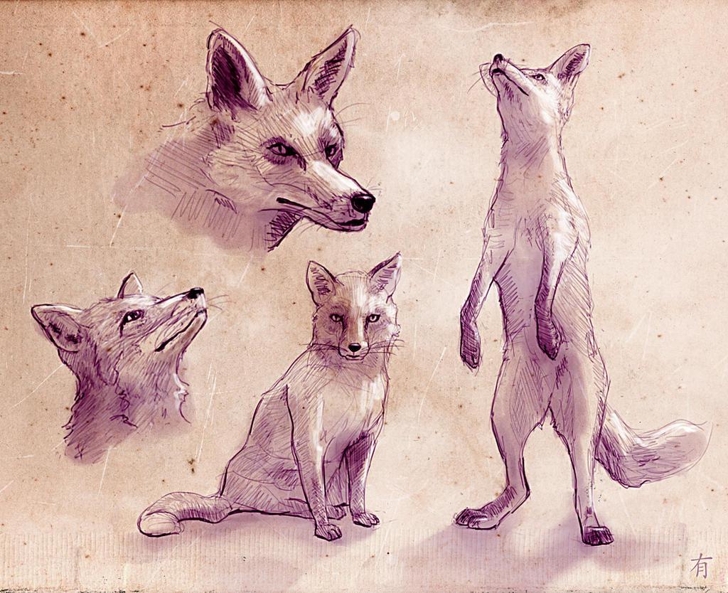 Fox Studies by arisuonpaa