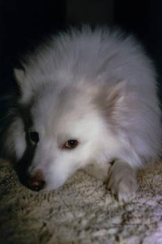 Utah Moody Dog
