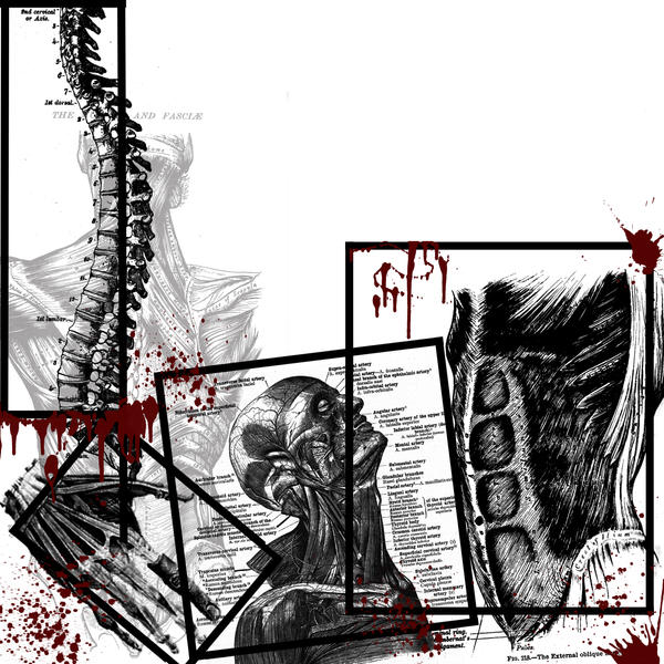 gallery for house anatomy wallpaper