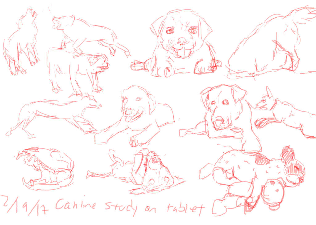 02192017 Canine Study On Tablet by gooolgi