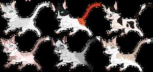 ota cat adopts | 1, 4, 6 open