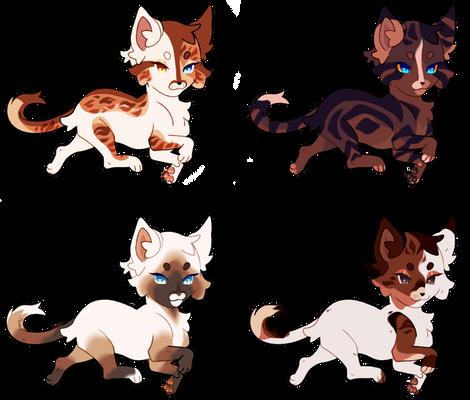 cat design ota | 4/4 open
