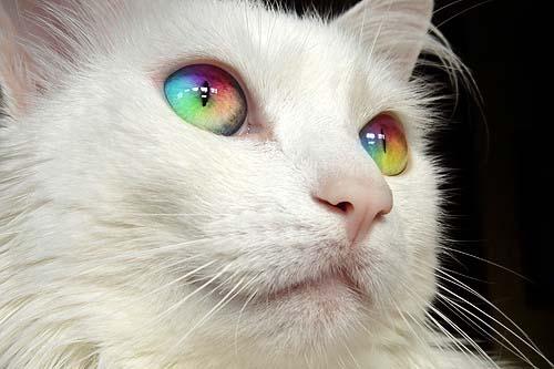 Rainbow_Eye_Cat_1_by_AZDF4545.jpg