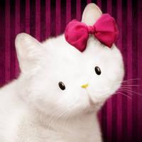 Hello Kittyz by ideea