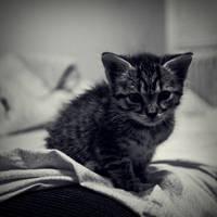 Purrfect Kitty by ideea