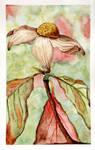 Dogwood Watercolor