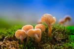 Little Mushroom Family