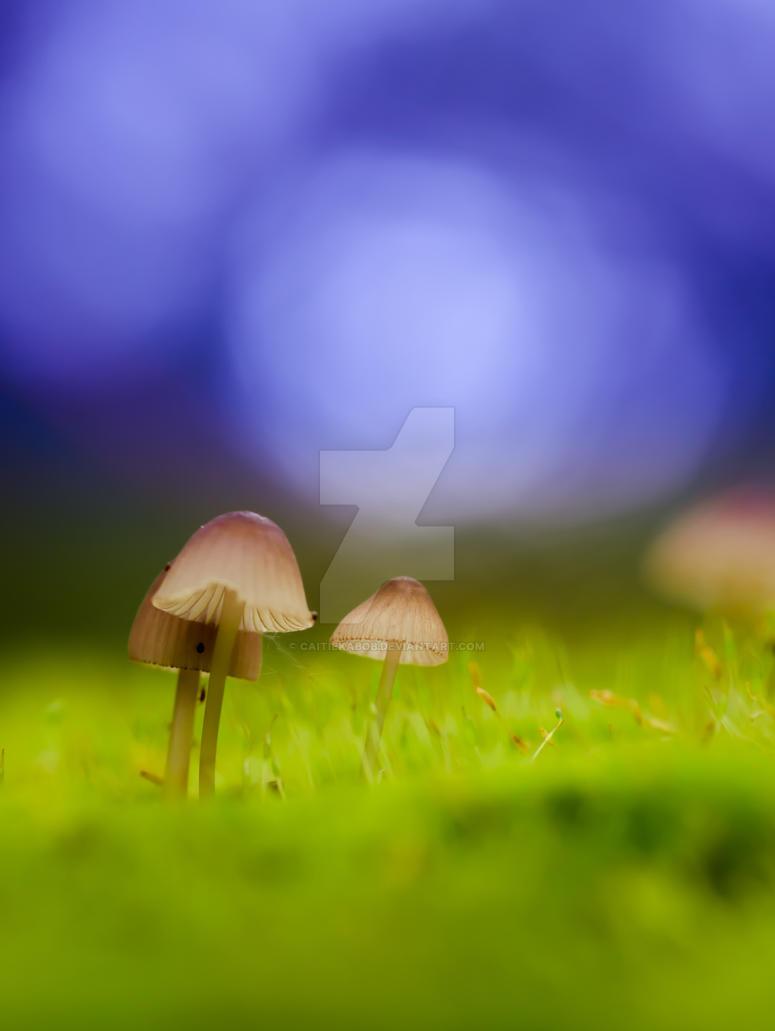 Tiny World by Caitiekabob