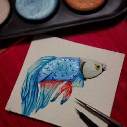 Betta Watercolor