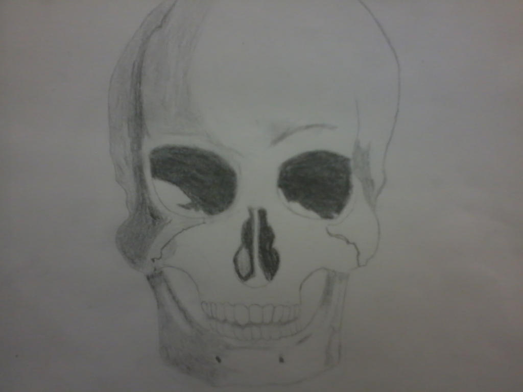 skull drawing by wolfspain12