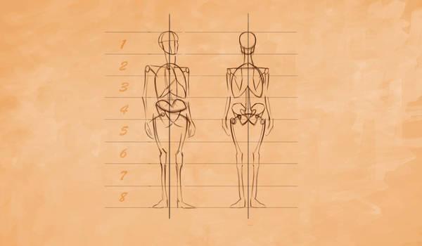 Anatomy 02