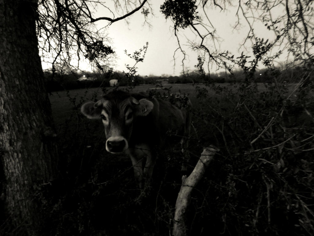 Bovine by smellslikegreen