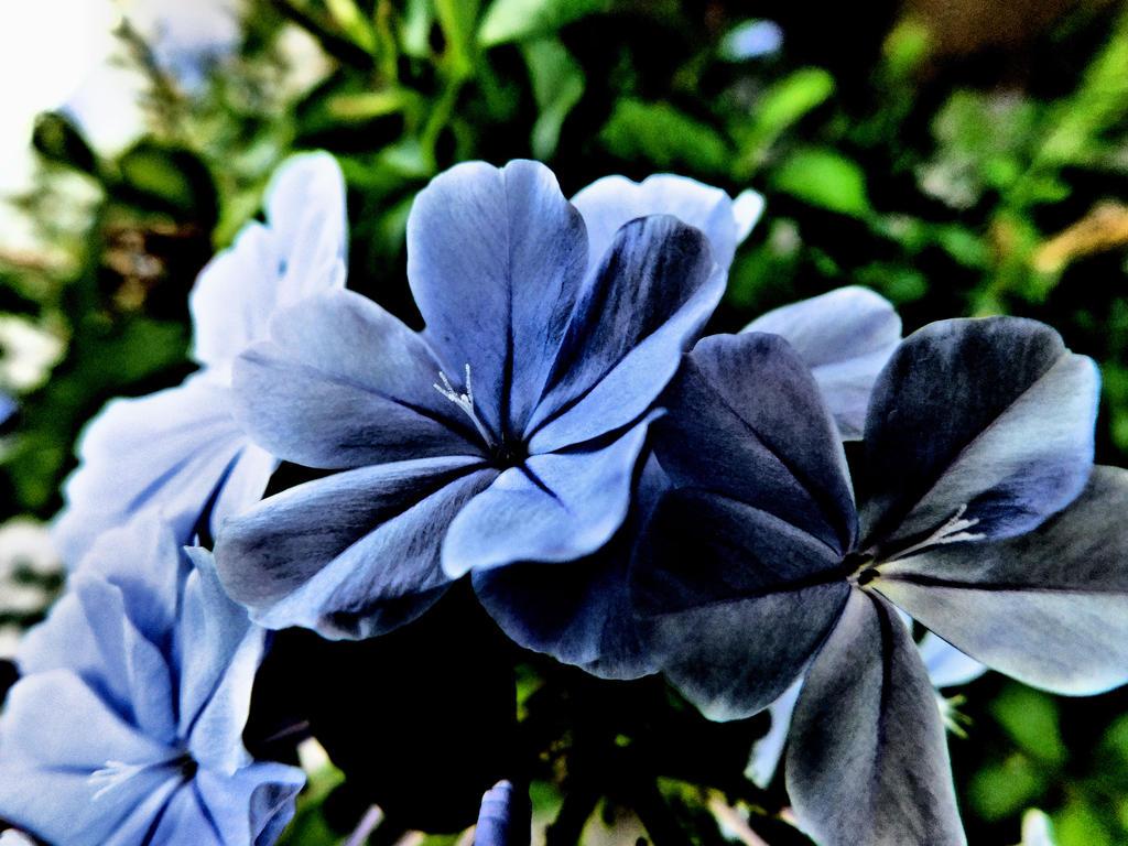 Bloom by smellslikegreen