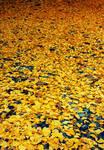 yellow carpet.