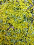 Lichen Texture 04
