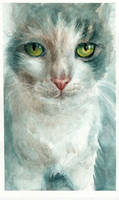 Ara cat! by ALEXAst