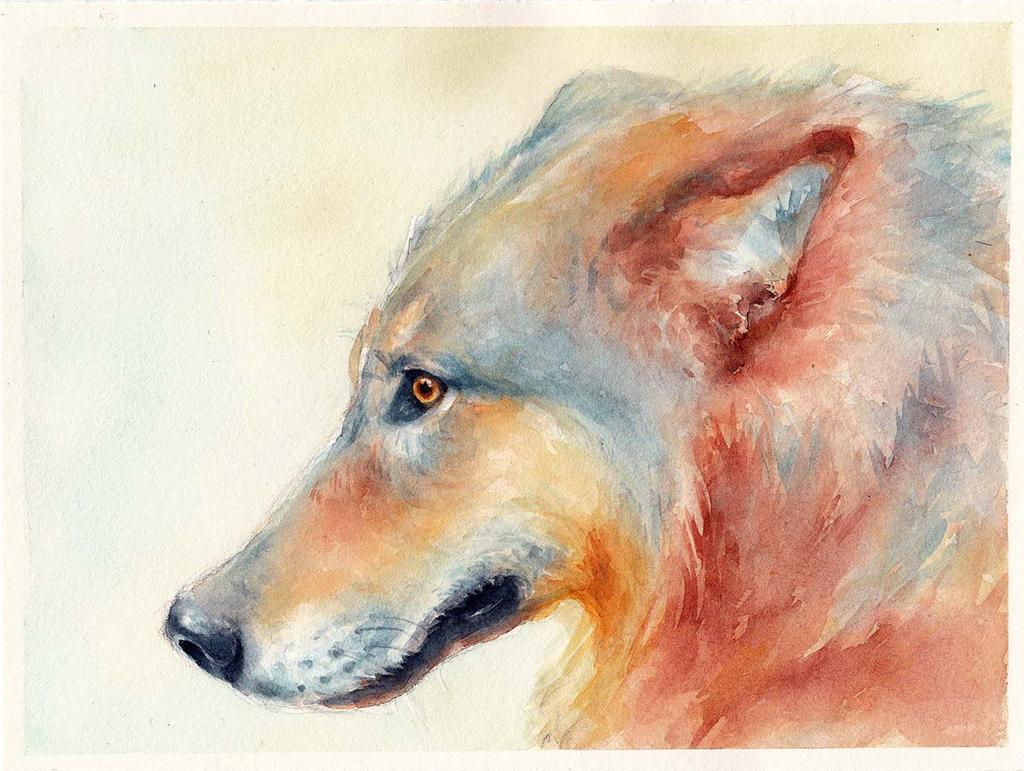 Wolfie by ALEXAst