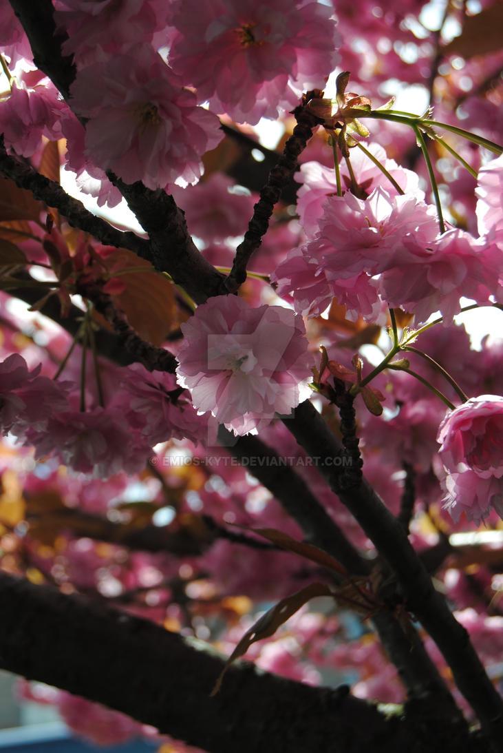 In Bloom by Emios-Kyte