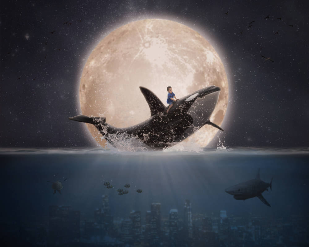 Boy riding a whale