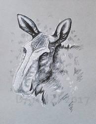 Moose Face Inks by daanzi