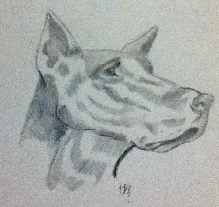 Dog by Dorothyy98