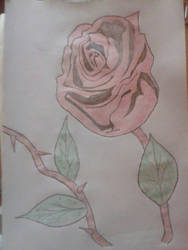 Valentines Rose ) by Casey0