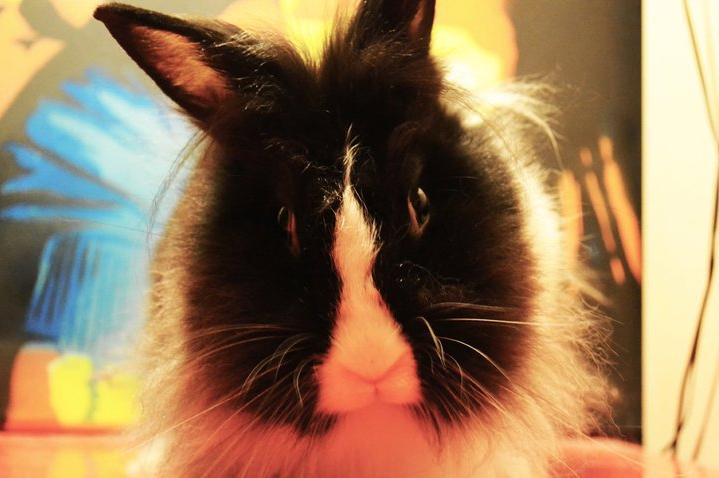 Ninja bunny by mariannizmo