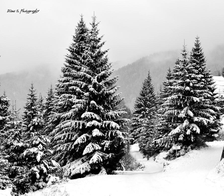 Retezat Mountains by firefly994